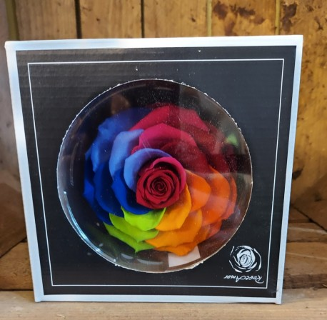 Rainbow infinity rose